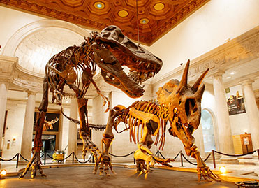 Photo of a dinosaur exhibit. Links to Gifts by Will